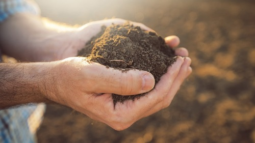 Best soil: Success factors for the best soil