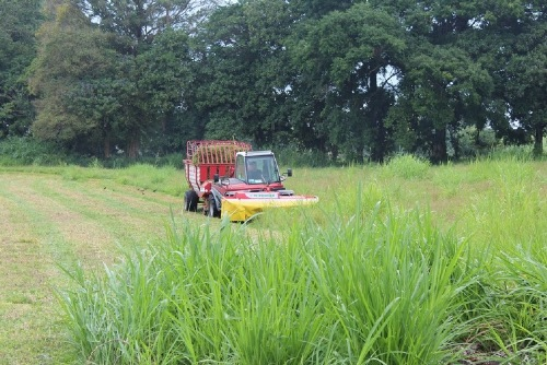 PÖTTINGER all over the world: forage harvesting in Costa Rica