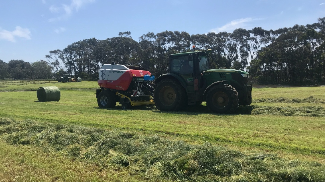Best forage on a dairy farm in Australia